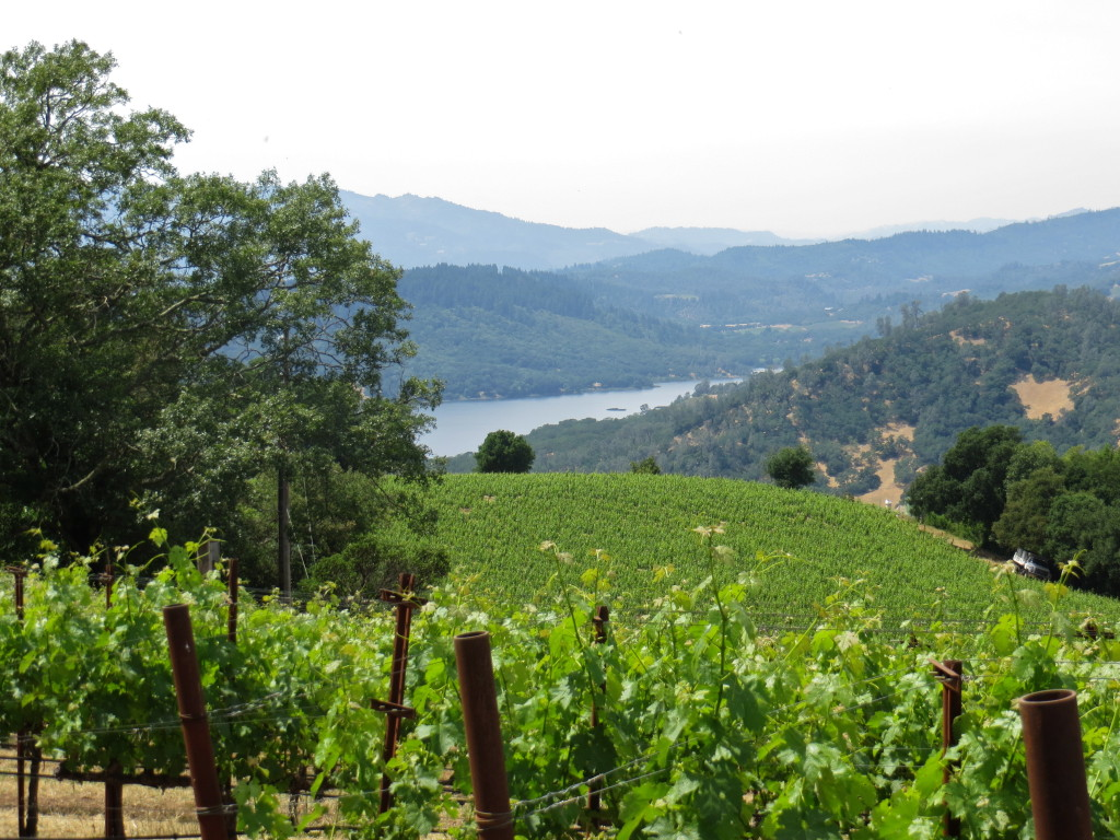 Napa Valley - Chappellet Winery