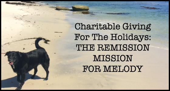 The Remission Mission for Melody - Animal Chemotherapy Fundraising Campaign