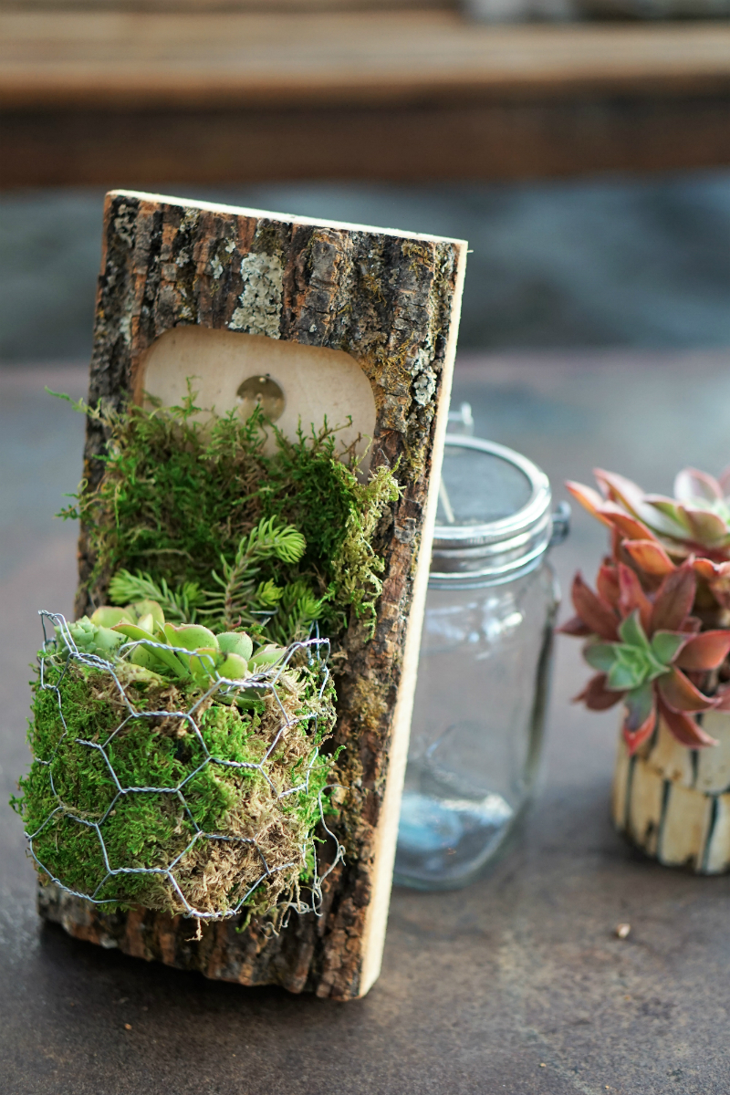Folktale Artisan Workshop on How To Create a DIY Mini Wall Garden