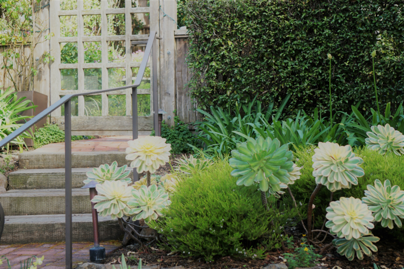 Simple Ways To Refresh Your Home Garden for Spring - Succulent Garden