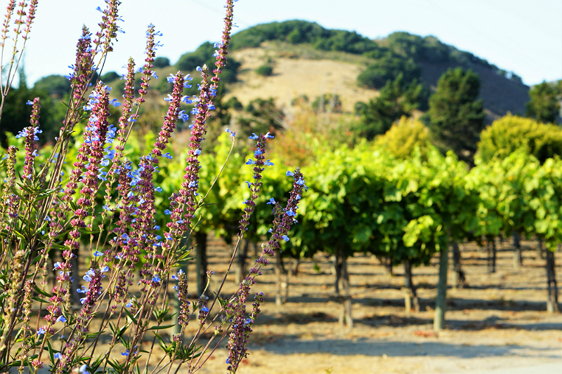 Yoga in the Vines at Folktale Vineyards and Winery