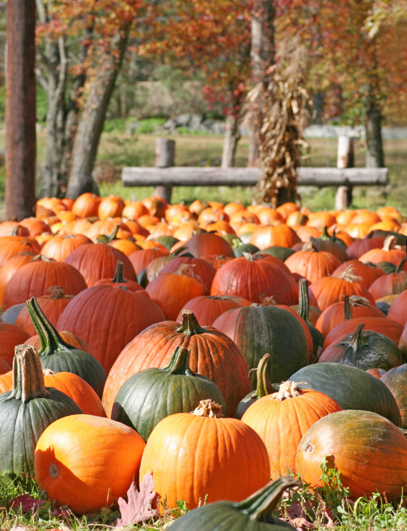 Inspired By The Season - Fun Ways To Enjoy The Best Things About Fall - Pumpkin Patch