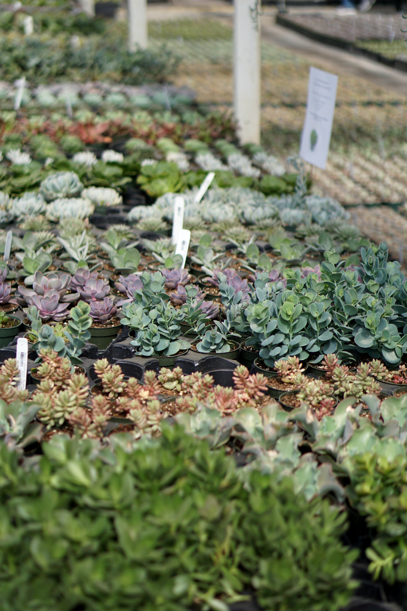 The Green Thumb's Guide to Gardening: How To Care for Succulents at Home