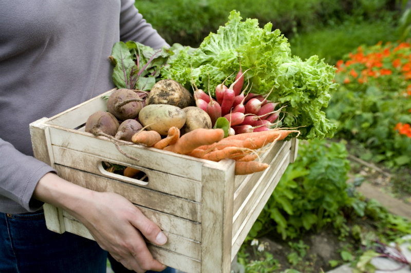 12 Healthy Diet Tips from Nutrition Experts To Help You Shed Unwanted Pounds
