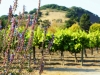 The Deluxe Central Coast Vacation Giveaway - Folktale Vineyards