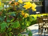 The Deluxe Central Coast Vacation Giveaway - Folktale Winery Gardens