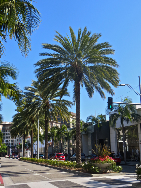 Travel Guide To Beverly Hills - Rodeo Drive