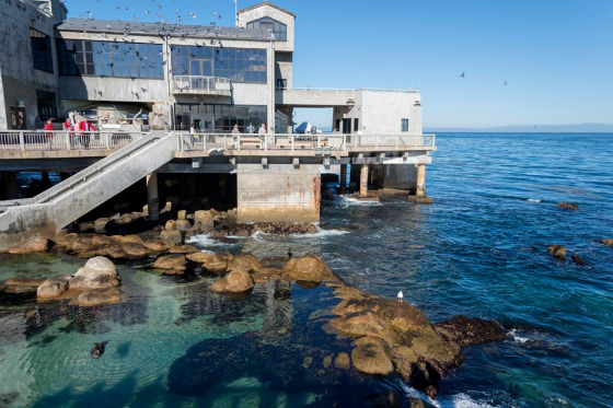 Monterey Peninsula Luxury Vacation Giveaway - Monterey Bay Aquarium