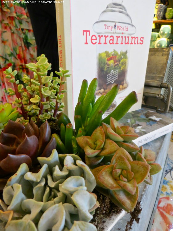 DIY Garden Tutorial How To Create A Terrarium with Succulents