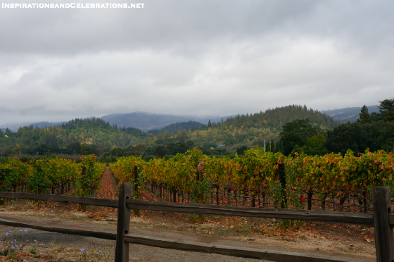 Fall Travel Guide to Napa Valley - Napa Valley Vineyards