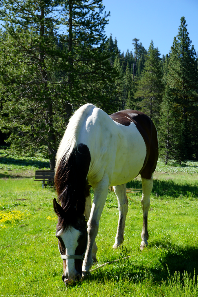 Lake Tahoe Travel Guide - Alpine Meadows Stables Horses