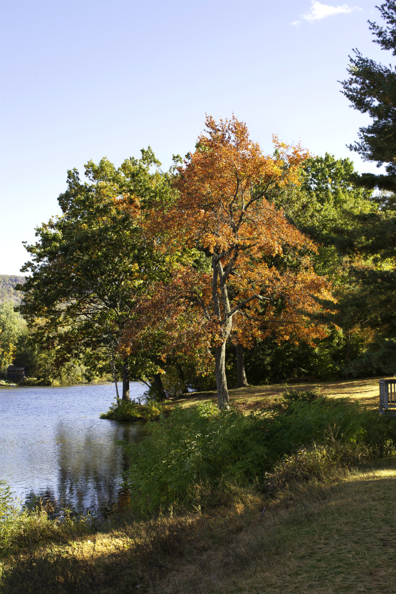 Fall Foliage Trips To Take On The East Coast