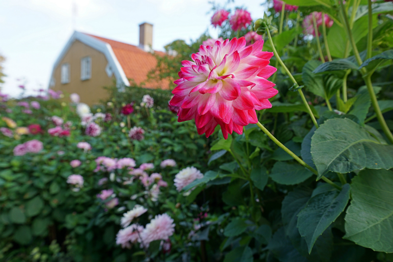 The Luxury Travel Guide to Gothenburg Sweden - Botanical Gardens