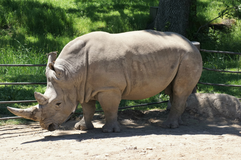 Safari West - An African Adventure in Northern California Wine Country