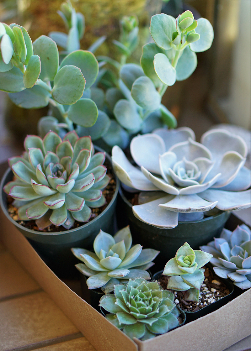 DIY Home Decor Tutorial - How To Make a Pumpkin Succulent Centerpiece