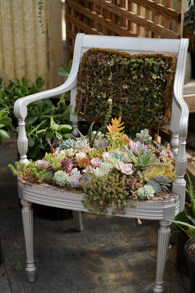 The Green Thumb's Guide to Gardening - How To Care for Succulents at Home