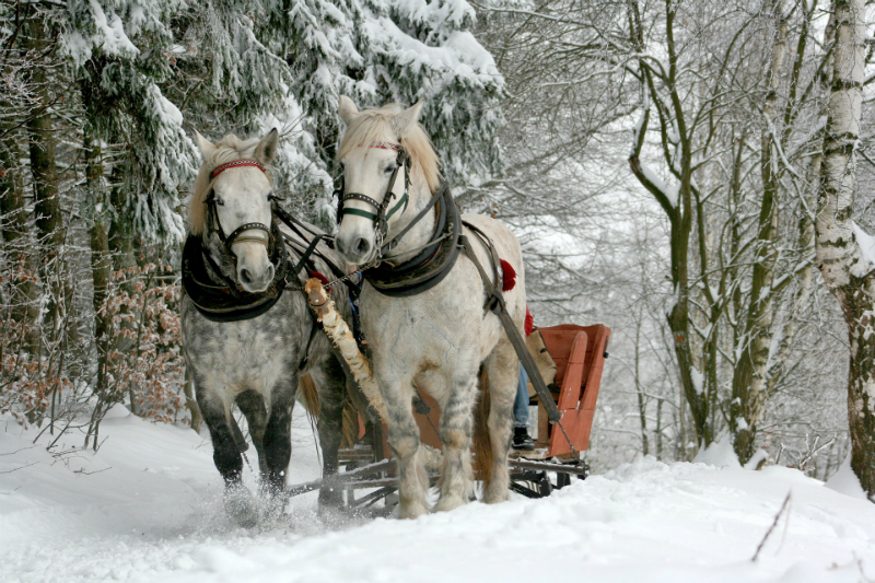 10 Festive Things To Do During The Holidays - Horse-Drawn Sleigh Ride