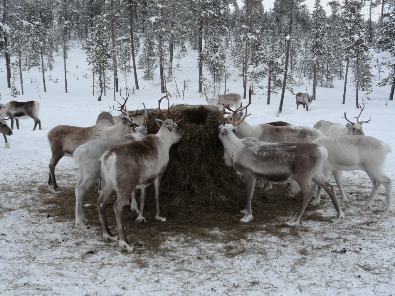 10 Festive Things To Do During The Holidays - Reindeer Farm