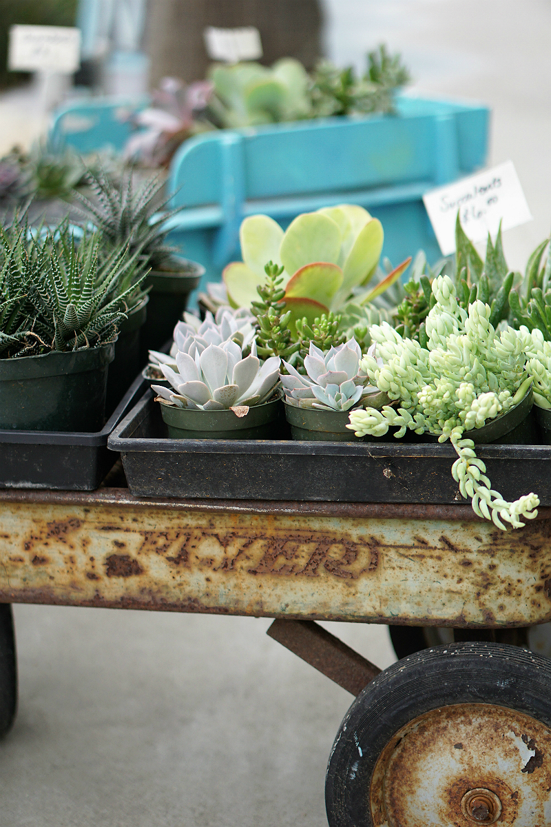 Fun Mother's Day Activities That Moms Would Love To Do - DIY Home and Garden Projects