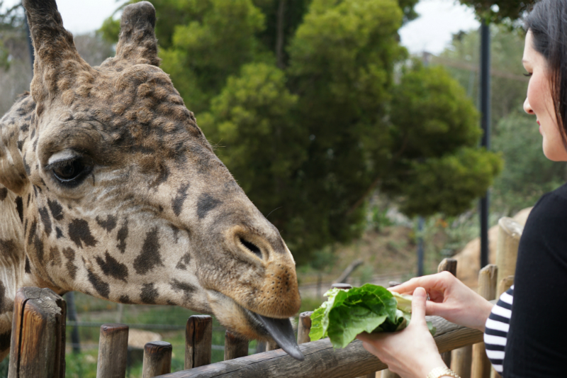 Fun Mother's Day Activities That Moms Would Love To Do - Feeding Animals at The Zoo