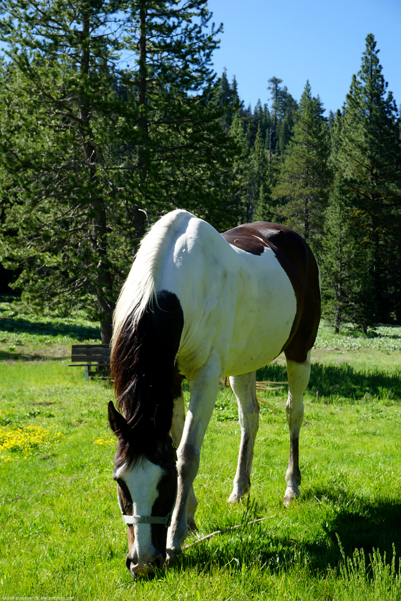Fun Mother's Day Activities That Moms Would Love To Do - Horseback Riding