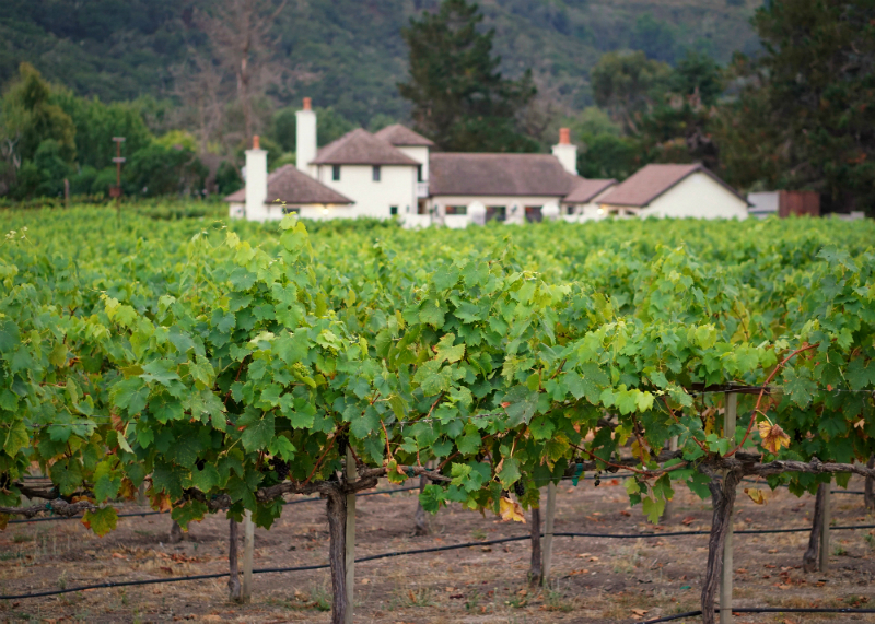 Fun Mother's Day Activities That Moms Would Love To Do - Wine Tasting at a Vineyard