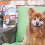 Milo's Kitchen Homestyle Dog Treats That Your Furry Friends Will Love