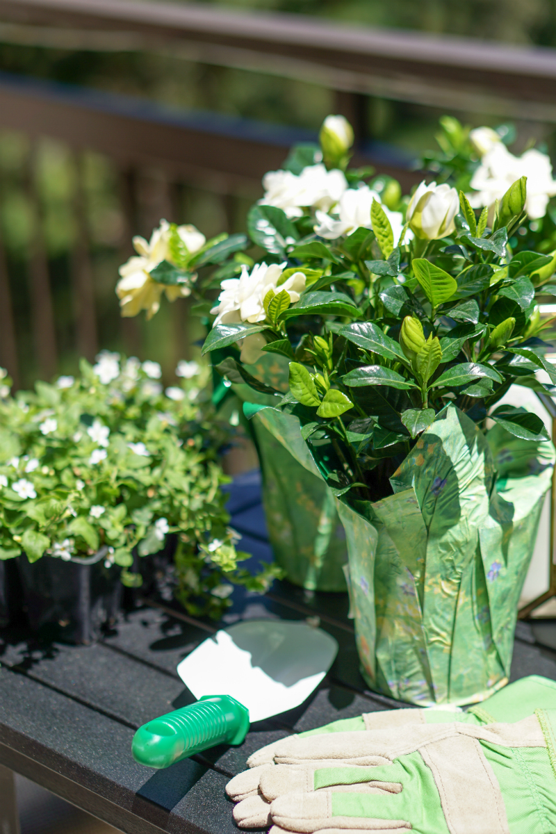 Summer Gardening Guide: How To Quickly & Easily Update Your Patio