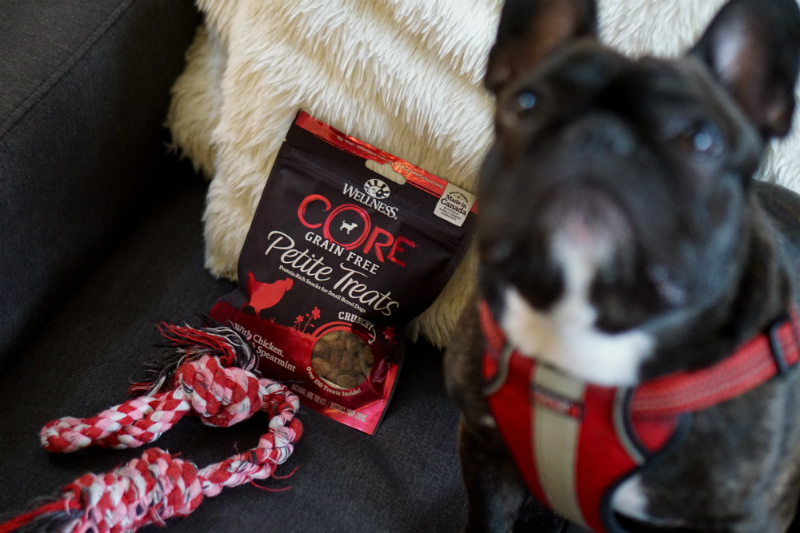 Why Wellesley The Frenchie Loves Wellness CORE Natural Dog Food